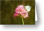 Pink Flower Prints Digital Art Greeting Cards - Sitting pretty Greeting Card by Sharon Lisa Clarke