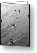 Surf Photography Greeting Cards - Sitting Waiting Wishing Greeting Card by Brad Scott