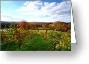 Vineyard Digital Art Greeting Cards - Six Miles Creek Vineyard Greeting Card by Mingqi Ge