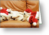 Sleeping Dog Greeting Cards - Six Puppies Sleep On Sofa, Some Wear Santa Hats Greeting Card by Karina Santos