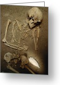 Burials Greeting Cards - Skeleton, 2,000 Years Old, With Large Greeting Card by Kenneth Garrett