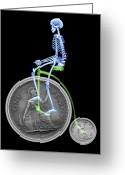 Penny Farthing Greeting Cards - Skeleton On A Penny Farthing Greeting Card by D. Roberts