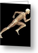 Sprinting Greeting Cards - Skeleton Sprinting Greeting Card by Roger Harris