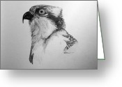 Large Bird Drawings Greeting Cards - Sketch of an Osprey Greeting Card by Leslie M Browning