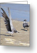 Tern Greeting Cards - Skiddish Black Tern Greeting Card by Roena King