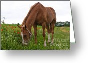Wear Greeting Cards - Skipy in the poppy field Greeting Card by Angela Doelling AD DESIGN Photo and PhotoArt