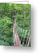 Outdoor Canopy Greeting Cards - Sky Bridge 2 Greeting Card by Aimee L Maher