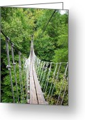 Outdoor Canopy Greeting Cards - Sky Bridge Greeting Card by Aimee L Maher
