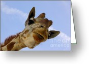 Long Neck Greeting Cards - Sky High Giraffe Greeting Card by Robert Frederick