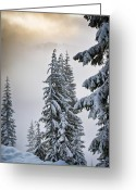 Snowy Tree Greeting Cards - Skyline Lake Forest Greeting Card by Inge Johnsson