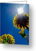 Blue Leaves Greeting Cards - Skyskrapers Greeting Card by Robert Harmon