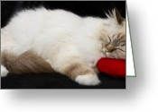 Sacred Body Greeting Cards - Sleeping Birman Greeting Card by Melanie Viola
