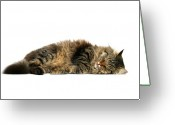 Cat Eyes Greeting Cards - Sleeping Cat Greeting Card by © Nico Piotto