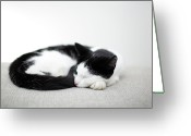 Cat Eyes Greeting Cards - Sleeping Cat Greeting Card by Marcel ter Bekke