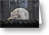 Amimal Greeting Cards - Sleeping King Greeting Card by Tammy Price