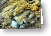 The King Greeting Cards - Sleeping Lion Greeting Card by Chris Thaxter