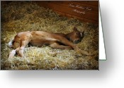 Dressage Photo Greeting Cards - Sleeping Newborn Greeting Card by Terry Kirkland Cook