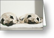 Sleeping Dog Greeting Cards - Sleeping Pug Dogs Greeting Card by Elli Luca