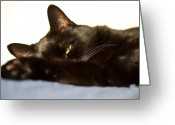 Black Cat Greeting Cards - Sleeping with one eye open Greeting Card by Bob Orsillo