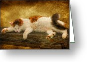 Calico Cat Greeting Cards - Sleepy Kitty Greeting Card by Lois Bryan