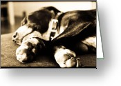 William And Magdalena Green Greeting Cards - Sleepy Puppy Greeting Card by Magdalena Green