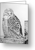 Large Bird Drawings Greeting Cards - Sleepy Snowy Owl on Fence Post Greeting Card by Leslie M Browning