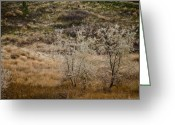 Destinations Digital Art Greeting Cards - Sliver Birch 2 Greeting Card by Vern Minard