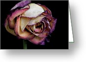 Sold Image Greeting Cards - Slow Fade Greeting Card by Rona Black