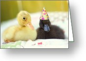 Duckling Greeting Cards - Slumber Party Greeting Card by Amy Tyler