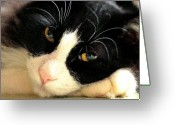 Tuxedo Greeting Cards - Slumbering Samson Greeting Card by Margaret Hood