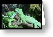 Iguana Greeting Cards - Small Iguanas Stirnlappenba Greeting Card by Rolf Bach