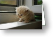 One Small Window Greeting Cards - Small Kitten On Window Greeting Card by Praxist