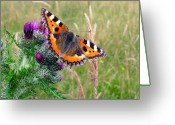 Animal Themes Greeting Cards - Small Tortoiseshell Butterfly Greeting Card by Photo by Suzanne Rowcliffe (suzanne.rowcliffe@gmail.com)