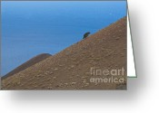 Sleeping Volcano Greeting Cards - Small tree on the sloping side of a sleeping volcano Greeting Card by Arno Enzerink