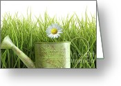 Ecosystem Greeting Cards - Small watering can with tall grass against white Greeting Card by Sandra Cunningham