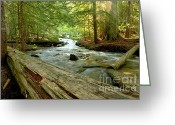  Beve Brown-clark Greeting Cards - Smell of Cedars Greeting Card by Reflective Moments  Photography and Digital Art Images