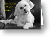 Dog Prints Photo Greeting Cards - Smiley Greeting Card by Lisa  DiFruscio