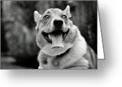 Vet Photo Greeting Cards - Smiling Pembroke Welsh Corgi Greeting Card by Rebecca Sherman