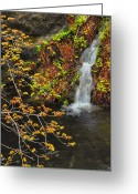 "\""guadalupe National Park\\\"" Greeting Cards - Smith Springs - Guadalupe Mountains Greeting Card by Stephen  Vecchiotti"