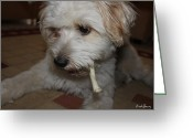 Cute Pyrography Greeting Cards - Smoking Lhasa apso Bingo 2 Greeting Card by Zoh Beny