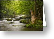 Smoky Mountains Greeting Cards - Smoky Mountains Solitude - Great Smoky Mountains National Park Greeting Card by Dave Allen