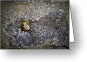 Irish Greeting Cards - Snail at Ballybeg Priory County Cork Ireland Greeting Card by Teresa Mucha