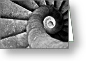 Black And White Animal Greeting Cards - Snail Greeting Card by Photography Tony Garcia