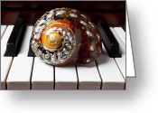 Pianos Greeting Cards - Snail shell on keys Greeting Card by Garry Gay