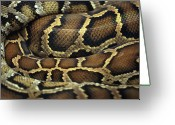 Poisonous Greeting Cards - Snake Greeting Card by John Foxx