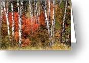 Grand Tetons Greeting Cards - Snake River Canyon Greeting Card by Sandra Bronstein