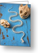 Wooden Board Greeting Cards - Snake skeleton and animal skulls Greeting Card by Garry Gay