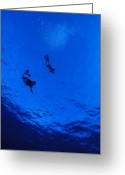 Humans Greeting Cards - Snorklers Diving Into A Deep Blue Greeting Card by Jason Edwards