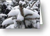 Ali Dover Greeting Cards - Snow Barren Greeting Card by Ali Dover