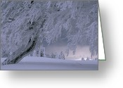Precipitation Greeting Cards - Snow-blanketed Trees In A Fairy Tale Greeting Card by Norbert Rosing